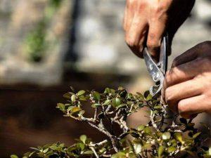 herramientas bonsai chinas baratas